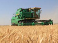 Бразилия закупила пшеницу в России впервые за восемь лет