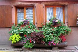 Все самое интересное о цветах Италии