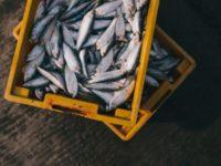 Почему рыба даже в приморских городах дороже мяса?