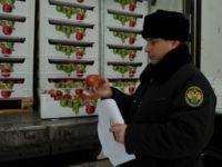 Россия запретила ввоз турецких яблок через Белоруссию